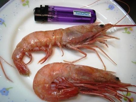 ���Y����(�j�Y/�\���~�M��)red head shrimp-
